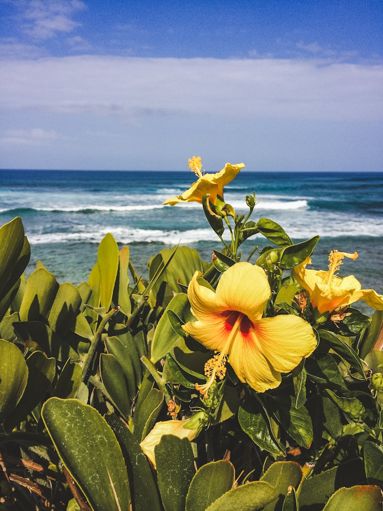 The Big Island of Hawaii is known for its natural beauty and incredible landscapes