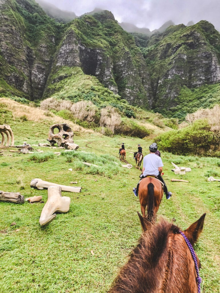 Today's Kualoa Ranch is still Oahu's largest cattle ranch, but has since expanded into a booming tourist spot and filming location!